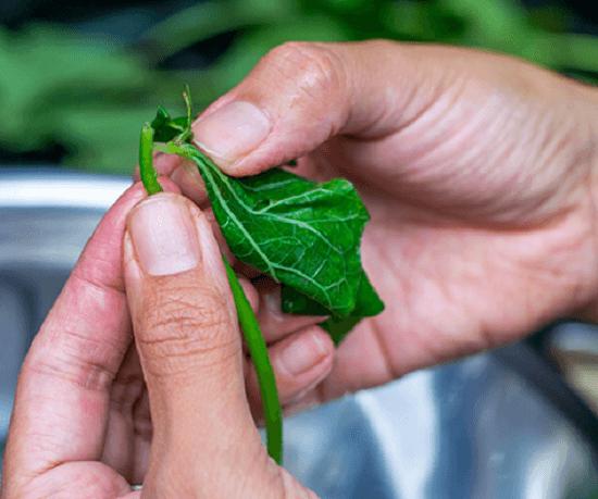 Cách xào thân lá khoai lang độc đáo thơm ngon cho cả nhà 4