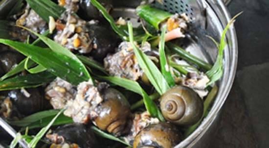 Cách làm ốc nhồi thịt hấp lá gừng ngon hấp dẫn